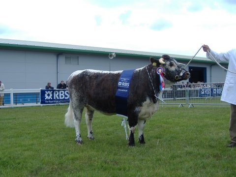 Benchil Edith - Breed & Female Champion Royal Highland Show 2006
